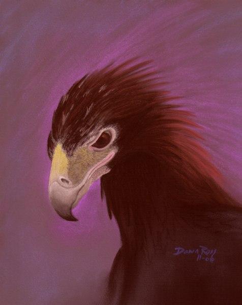 golden eagle bird. Eagle Storm middot; Golden Eagle